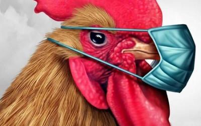 Drošības pasākumi putnu gripas laikā