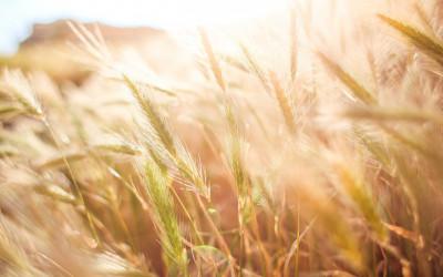 """SIA """"Biznesa Vadības Centrs"""" organizē augu aizsardzības līdzekļu apmācības"""
