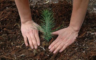 """AS """"Latvijas valsts meži"""" izsludina konkursu mežsaimniecisko darbu veikšanai"""